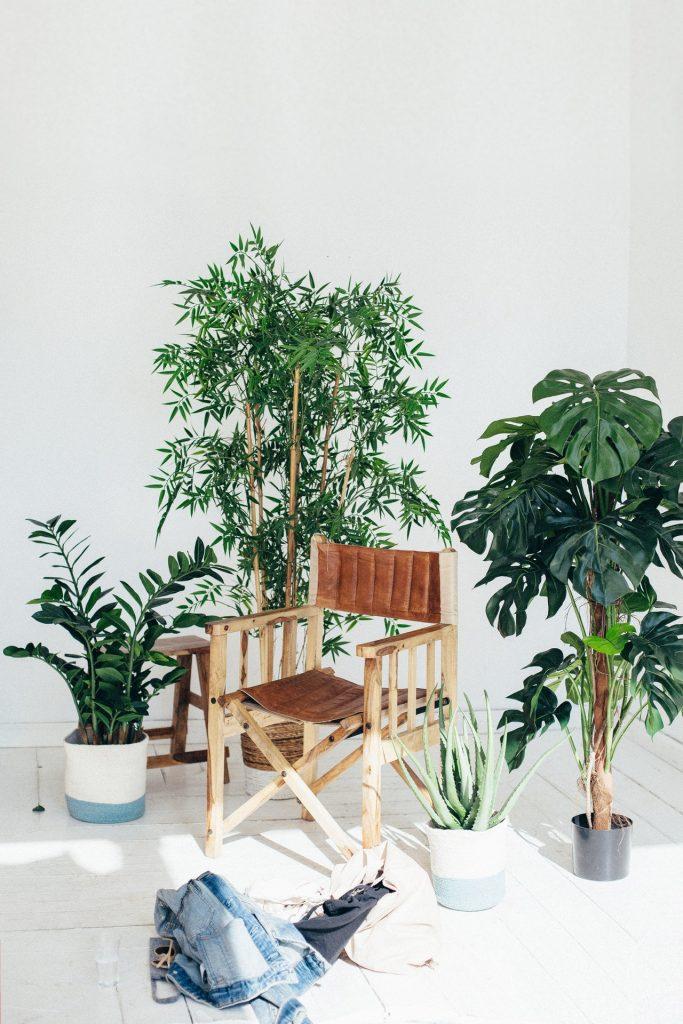přestěhujte své domácí rostliny