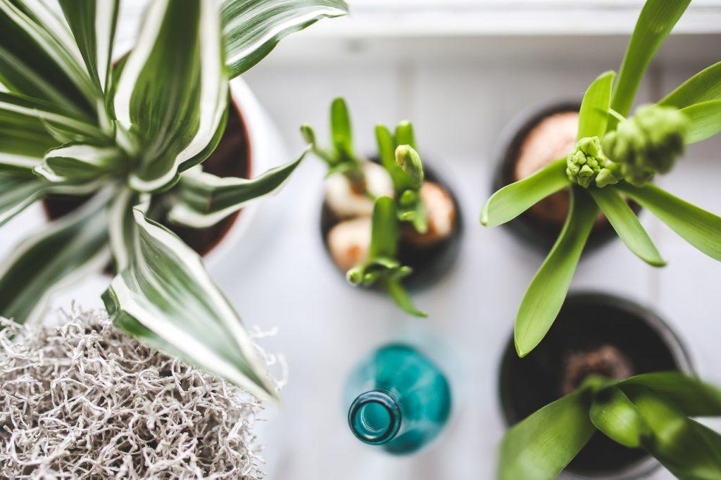 stěhování pokojových rostlin