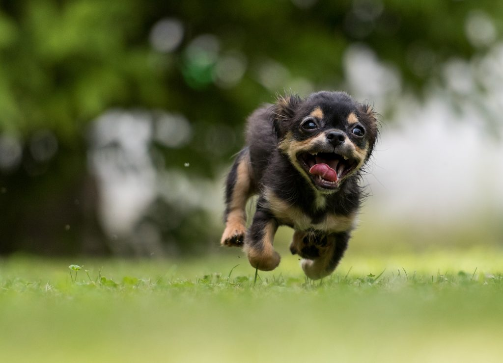 pomozte svému psovi zvládnout stěhování