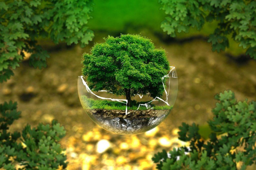 Ekologické stěhování