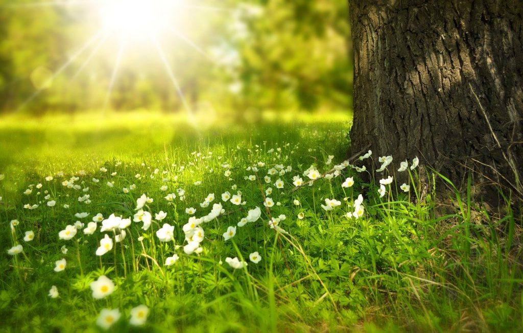 Stěhování na jaře