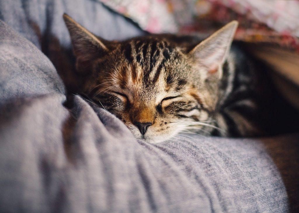 Přivítejte kočku v jejím novém domově