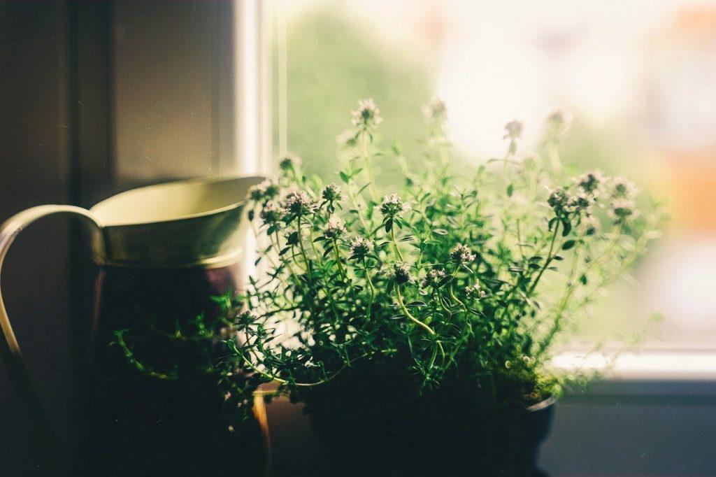 Jak zabalit pokojové rostliny pro stěhování