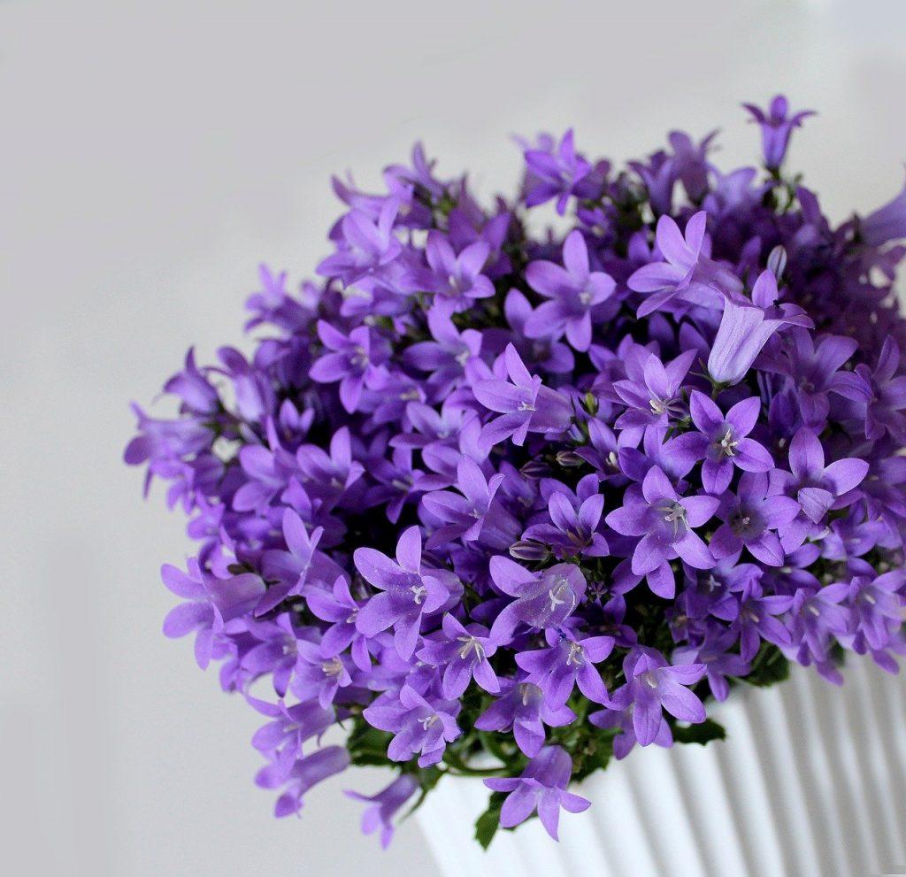 Jak zabalit vaše rostliny v květináči