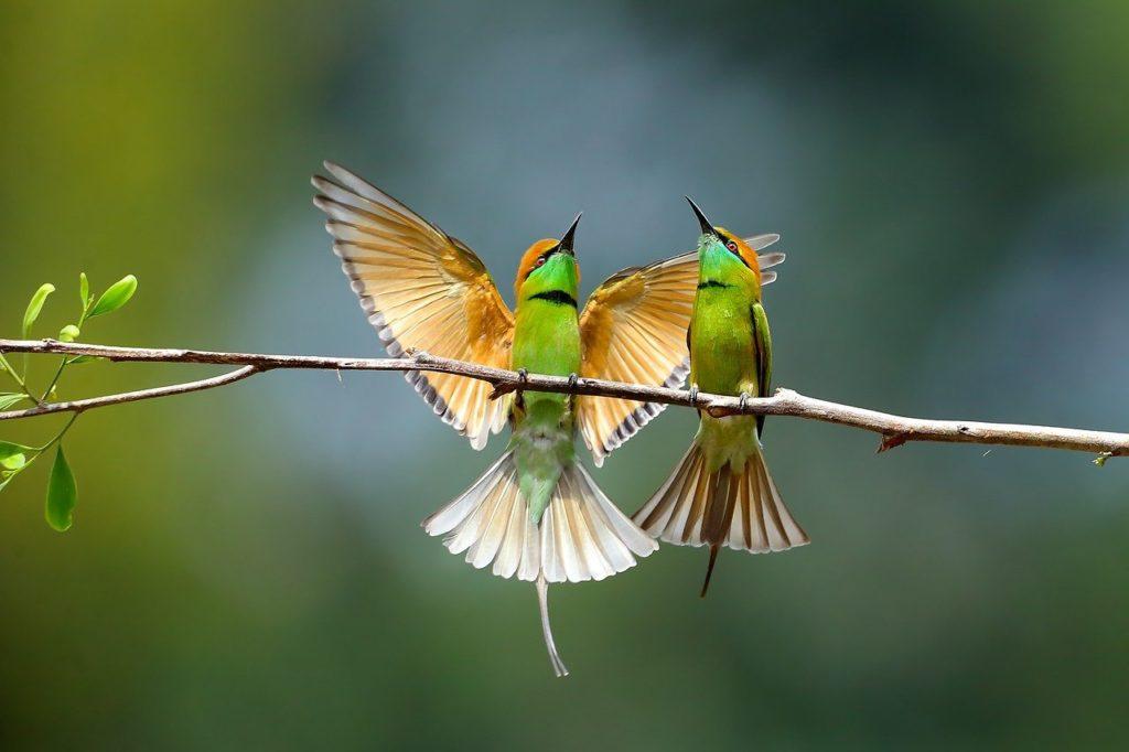 Jak stěhovat domácí ptactvo