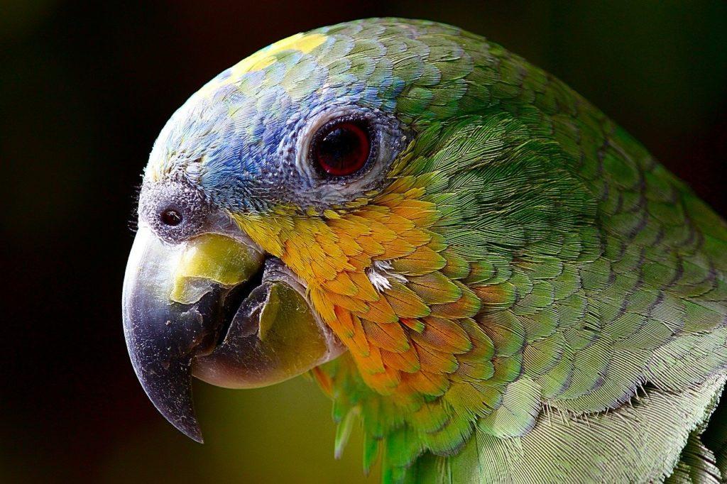 Přestěhujte svého papouška